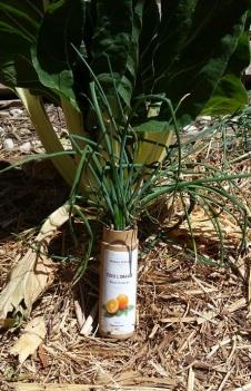 planting tube 2.jpg